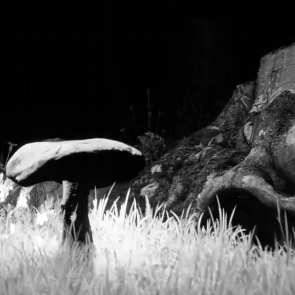 Light Year 58: Digital Fairy Tales: Dark Nights and Black Cats